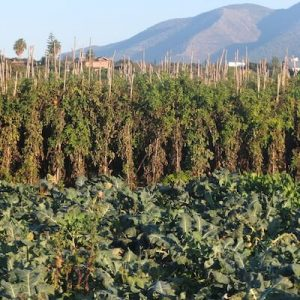 Organic Food in Marbella